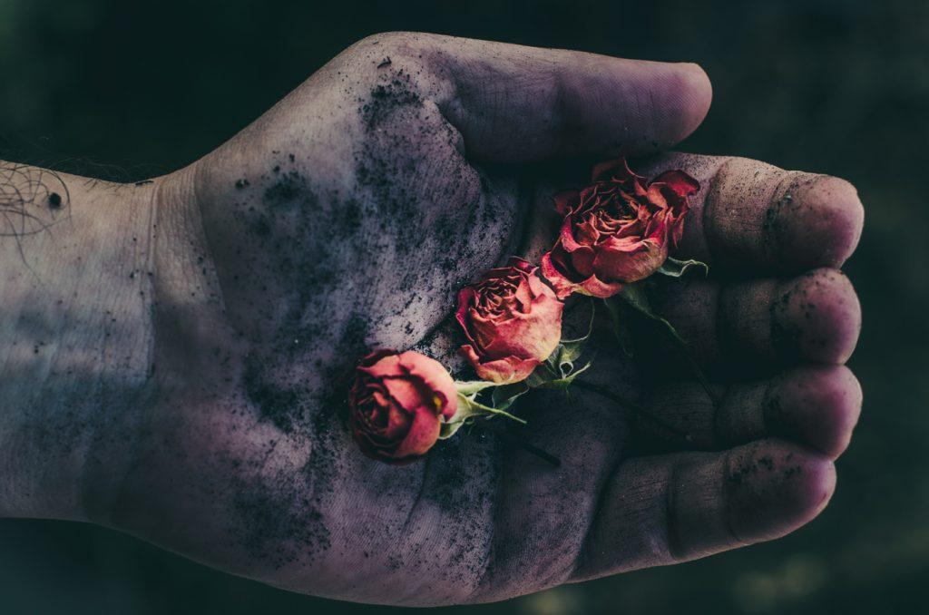 fotografie artistica mana cu trandafiri